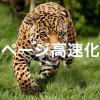 サイト高速化のためにWordPressにAMPを導入する時の注意点とメリット